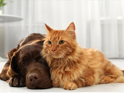 Do you know pet hair maintenance tips?